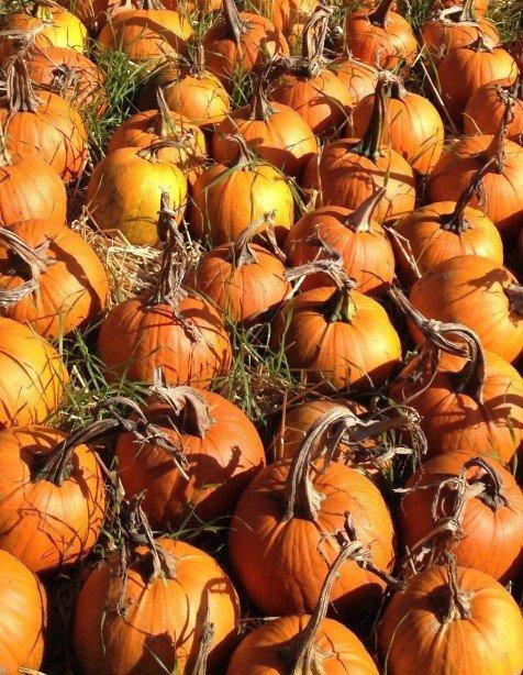 Pumpkin Patch extraordinaire!